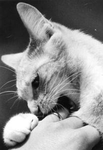 Biting the Hand