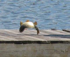 Flip Flop Fish