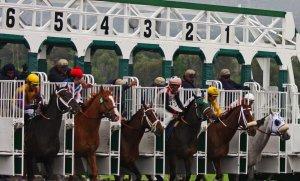 Horses at Gate